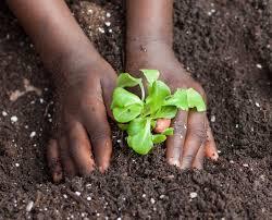 Florida Vegetable Gardening Guide by Full Steam Ahead For Vegetable Garden Soil Prep Newsletters
