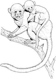 spider monkey coloring pages coloring page