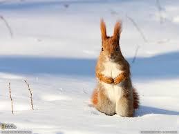 9592 winter animal desktop wallpaper walops com