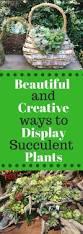 55 best succulents images on pinterest succulent plants