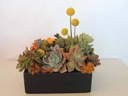 succulent arrangements succulent arrangement in ceramic container