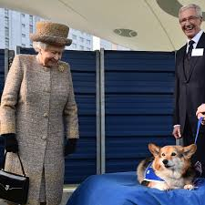 queen stops breeding corgis as she doesn u0027t want to u0027leave any