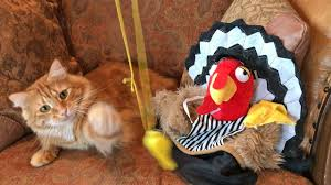 cat plays with referee whistle and thanksgiving hats