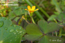 growing native plants from seed december 2014 what florida native plant is blooming today