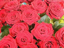 Beautiful Flowers Image Exclusive Wallpapers On Beautiful Flowers The Flower Expert