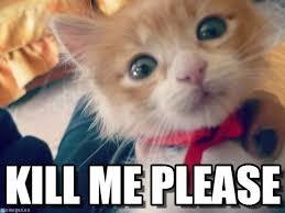 Kill Me Meme - kill me please my cat meme on memegen
