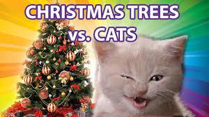 funny cats vs christmas trees youtube