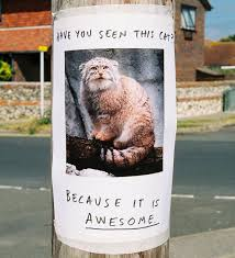 Memes Irl - irl troll posters know your meme