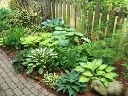 Garden Calendar Zone - hosta companion plants zone 5 blog archives two holt our