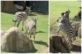 sunday morning at the dallas zoo