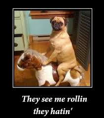 They See Me Rollin Meme - 47 best they see me rollin images on pinterest funny animal