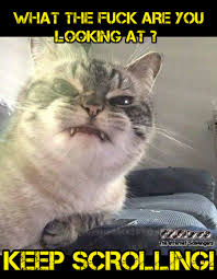 Sarcastic Cat Meme - funny thursday picture gallery uproarious pics and memes pmslweb