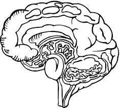 Human Brain Coloring Page Colour Me Pinterest Brain Human Brain Coloring Page