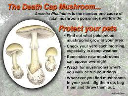 backyard mushrooms dogs home decorating interior design bath