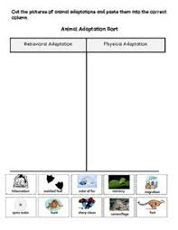 results for animal adaptations worksheet guest the mailbox
