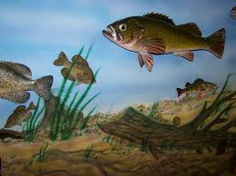 glasscases2 painted wall mural with fish paintings sillhouettes skin and reproduction fish mounts