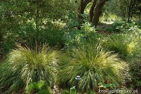 grasses for shade knoll gardens ornamental grasses and