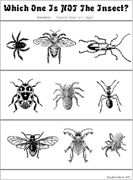 which one is not an insect