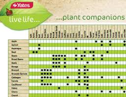 herb growing chart companion planting yates