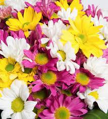 multicolor daisies color party