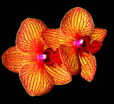 Tropical Rainforest Plant List - misting orchids