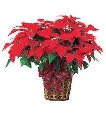 Christmas Plants 10 Best Xmas Plant Basket Ideas Images On Pinterest Plant Basket