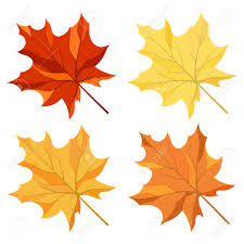 autumn color maple leaves set royalty free cliparts vectors and