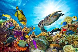 tropical fish wallpaper sea life wall murals wallsauce coral reef diversity mural wallpaper