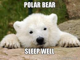 Polar Bear Meme - polar bear sleep well popular opinion bear make a meme