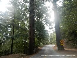 Santa Cruz County Christmas Tree Farms by Santa Cruz Mountains Challenge 2012 Ride Chronicles
