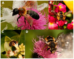 pollinators of native plants insects free full text positive and negative impacts of non