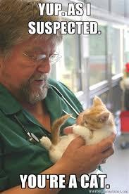 Vet Memes - cat memes ten reasons to adopt a cat meow blog cats protection