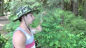 native plants pacific northwest pacific northwest plants short documentary youtube