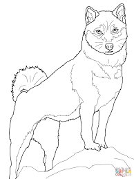 shiba inu coloring page free printable coloring pages