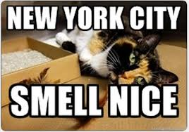 Meme Ny - new york city cat meme cat planet cat planet