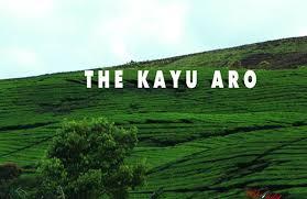 Teh Kayu Aro perkebunan teh kayu aro jambi kebun teh tertinggi kedua di dunia