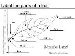 chapter 7 nutrition in plants lesson 1 structure of plants and leav u2026
