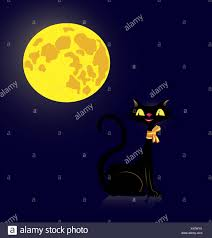 black cat and moon stock photos black cat and moon stock images