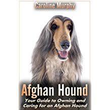 owning an afghan hound amazon co uk caroline murphy books