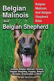 belgian malinois rescue florida belgian malinois and belgian shepherd belgian malinois and