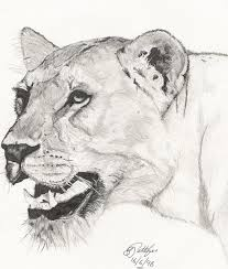 lioness pen and ink drawing by glen pettifer artwanted com