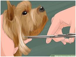 Get Better How Much is A Dog Walker Results by Following 3 Simple Steps