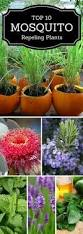 Backyard Mosquito Repellent by 18 Amazing Plants That Will Repel Mosquitos Gardens Outdoor