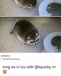 Raccoon Meme - 25 best memes about fat raccoon fat raccoon memes