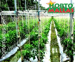 merits of the v trellis system hortomallas supporting your crops
