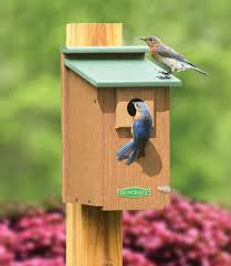 duncraft duncraft 2921 eco friendly bluebird house