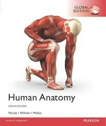 Human Anatomy And Physiology Marieb 5th Edition Booktopia Human Anatomy Global Edition By Elaine N Marieb