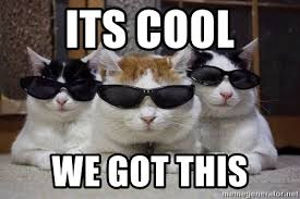 We Got This Meme - its cool we got this cats in shades meme generator