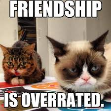 Grumpy Cat Meme Happy - 30 very funny grumpy cat meme pictures and photos