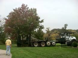 we re moving trees again at arborfest oct 13 14 shade tree farm